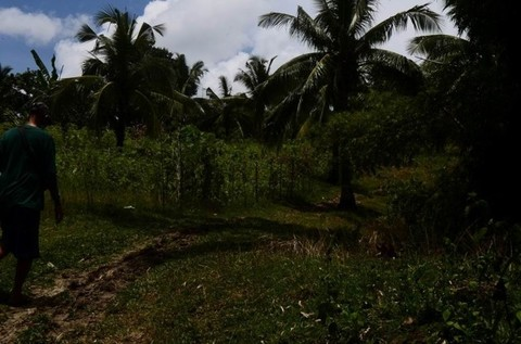 N59660016_mvc-001f.jpg Bauland Agrarland 3,5ha für Investor, Meerblick, Philippinen