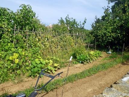 Gemüsegarten Südfrankreich?... Warum eigentlich nicht?!<br /> <br /> Anwesen mit 3 Wohnungen und Pool in ruhiger Lage.