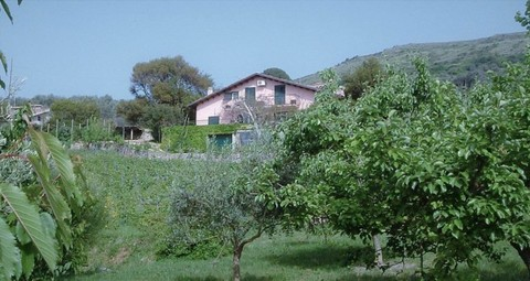 PI0302_mvc-001f.jpg Grosszügiges Landhaus, Weinberg, Bosa, Sardinien