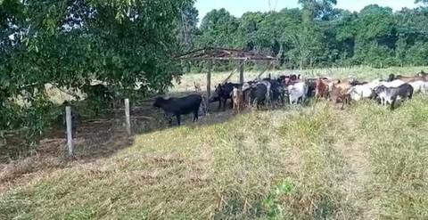 PBR0143_mvc-001f.jpg Brasilien 1?000 Ha Farm mit Viehzucht und Fischzucht