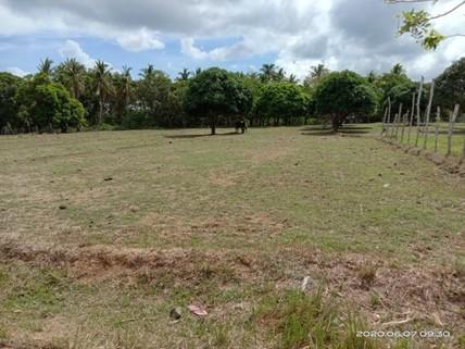 N59660010_mvc-001f.jpg Bauland,Investment,Agrarland,2000qm, Küstennähe,Philippinen