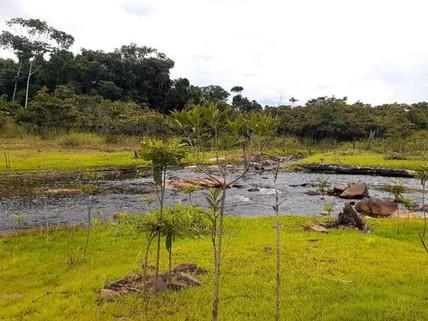 PBR0121_mvc-001f.jpg Brasilien 1?000 Ha Tiefpreis - Grundstück mit Rohstoffen Reg