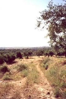 HU0013_mvc-001f.jpg Grundstück im Bauland  Ch-Pe 23,24,25,26,27,28,29