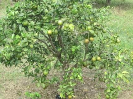 PBR0130_mvc-001f.jpg Brasilien riesengrosse 2?499 Ha grosse Farm mit Fruchtplanta