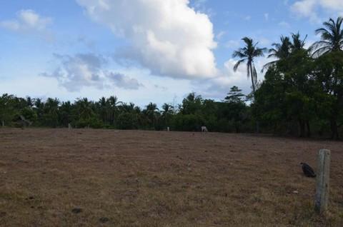 N59660004_mvc-001f.jpg Schönes naturbelassenes Grundstück mit Strand in Philippinen