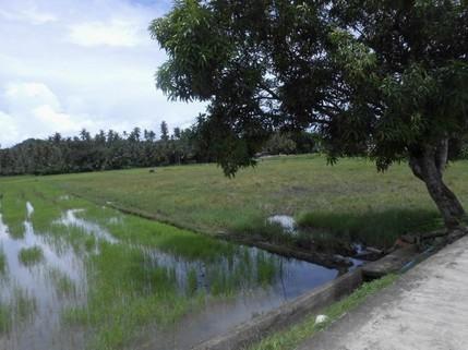 N59660007_mvc-001f.jpg Bauland, Investment, 3533sqm in Stadtnähe in Philippinen