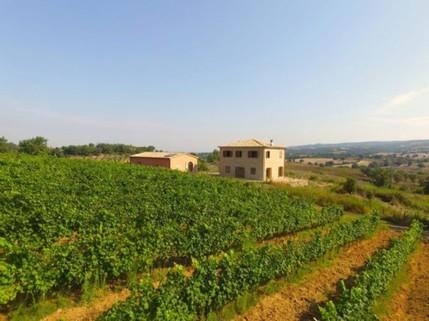 N60550038_mvc-001f.jpg Villa Magliano Toskana