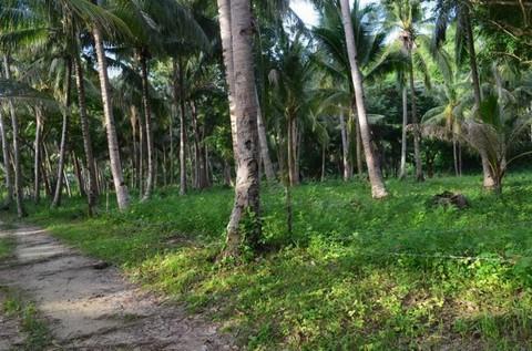 N59660005_mvc-001f.jpg Bauland für Investoren am schönen Binucot-Strand Philippinen