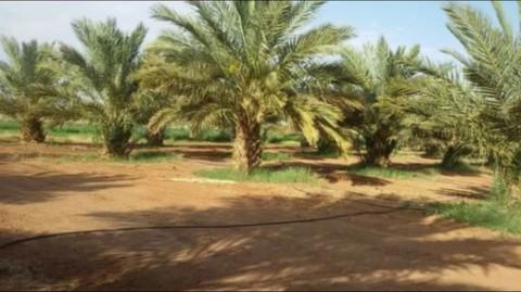 PMA0045_mvc-001f.jpg 25 ha Landwirtschaftliche Fläche mit Wohnhaus