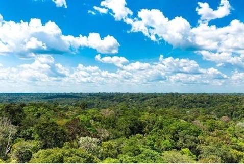 PBR0074_mvc-001f.jpg Brasilien 1?379 Ha grosses Grundstück für Kautschuk-Plantage