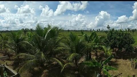 PBR0068_mvc-001f.jpg Brasilien riesengrosses 1?582 Ha Grundstück Region Manaus