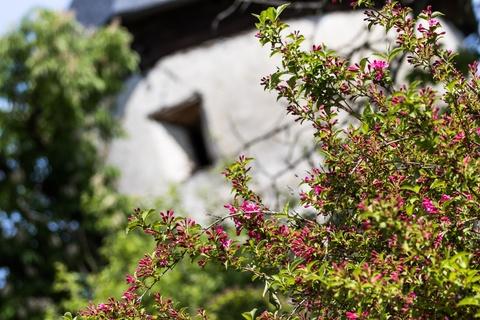 RB7A1753 Gartenwohnung mit Seezugang!