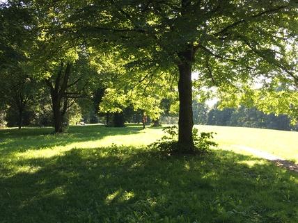 Park hinter dem Haus München Harlaching - Traumwohnung mit Dachterrasse und Garten