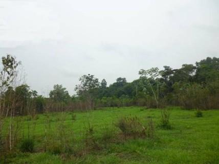 PBR0105_mvc-001f.jpg Brasilien 1?000 Ha Tiefpreis - Grundstück mit Rohstoffen Re