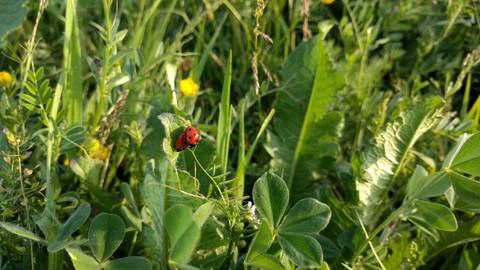 PMEX0014_mvc-001f.jpg 10 Hektar unberührter Jungle in der Nähe von Cancun