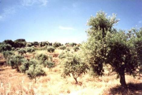 HU0015_mvc-001f.jpg Grundstück im Bauland  Pe42-49