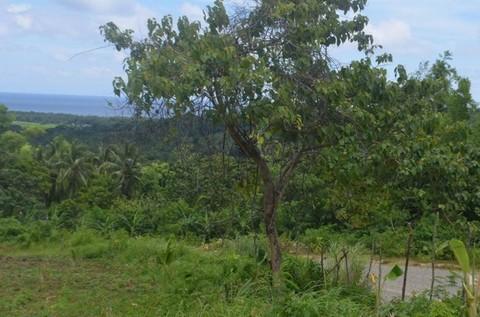 N59660014_mvc-001f.jpg Bauland, Agrarland 4ha, für Investor, Meerblick, Philippinen