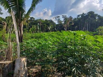 PBR0129_mvc-001f.jpg 1000 Hektar Land in Brasilien zum Tiefpreis