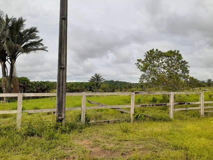 PD7481_mvc-001f.jpg Brasilien -1000 Hektar Grundstück mit Rohstoffen