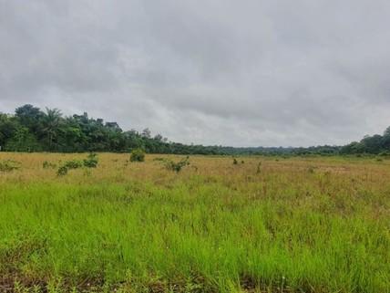 PBR0142_mvc-001f.jpg Brasilien 1?000 Ha Tiefpreis - Grundstück mit Rohstoffen Reg