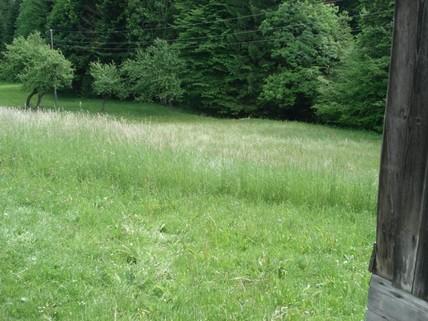 PSLO0059_mvc-001f.jpg Baugrundstück mit Wiese und kleinem Wald