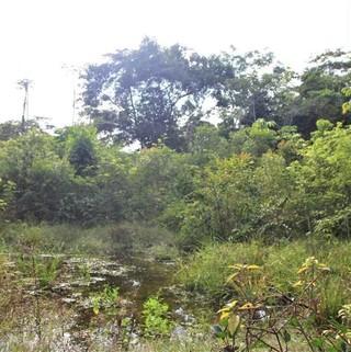 PBR0080_mvc-001f.jpg Grundstück im Dschungel 62,83 Ha,