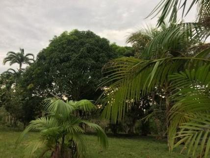 PBR0083_mvc-001f.jpg 294 Hektar - Farmbesitzer in Brasilien werden!