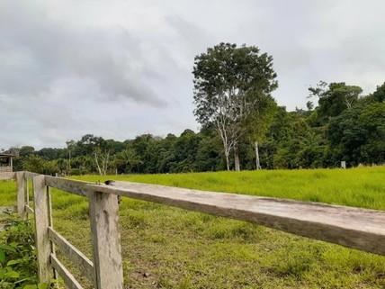 PBR0069_mvc-001f.jpg Brasilien 1?085 Ha Fazenda für Rinderzucht Region Rodovia
