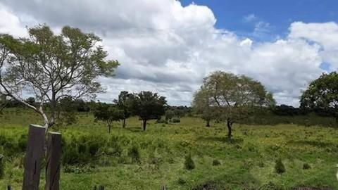 PBR0167_mvc-001f.jpg Brasilien riesengrosses 5199 Ha Fazenda Tercolim Region Rora