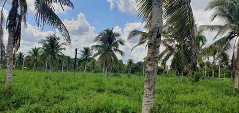 PBR0114_mvc-001f.jpg Brasilien 50 Ha Tiefpreis-Grundstück in der Nähe von Manaus