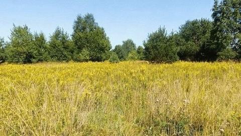PPY0020_mvc-001f.jpg Land zu verkaufen 31 Hektar