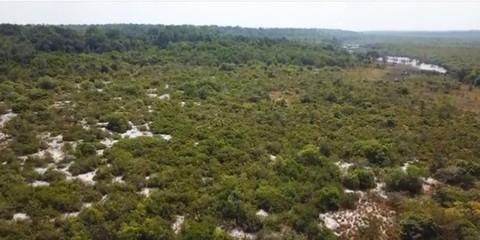 PBR0044_mvc-001f.jpg Brasilien 1000 Ha Grundstück in der Nähe von Manaus