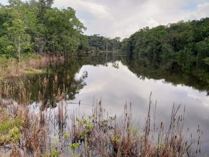 PBR0097_mvc-001f.jpg Brasilien 1?500 Ha Tiefpreis-Grundstück Manaus - Itacoatiara
