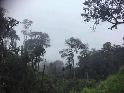 PEC0006_mvc-001f.jpg Wunderschöne Landstück im Ecuador?s Tropischer Wald