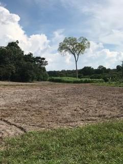 PBR0112_mvc-001f.jpg Brasilien riesengrosse 1?250 Ha Farm-mit Fruchtplantagen