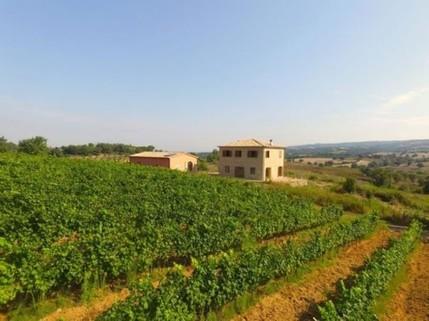N60550103_mvc-001f.jpg Bauernhaus mit Weingut und Olivenhain