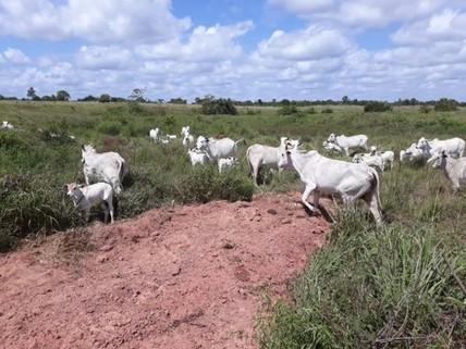 PBR0124_mvc-001f.jpg Brasilien 12?812 Ha grosse Rinderzucht - Farm mit Plantagen