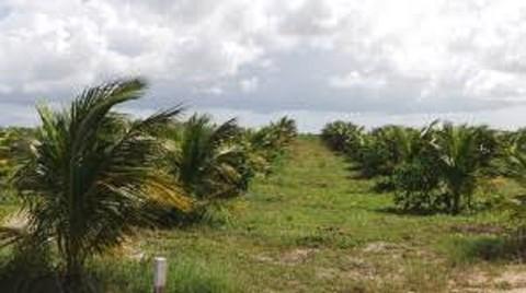 PBR0148_mvc-001f.jpg Brasilien 100 Ha grosse Orangen-Kokosnuss-Plantage
