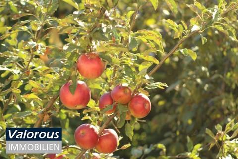 Familienhaus ausbaufähig! Großer Garten mit Obstbäumen!