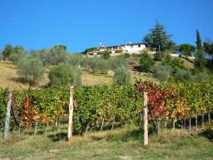 N60550116_mvc-001f.jpg Touristik. Weingut mit insgesamt 70 Zimmern