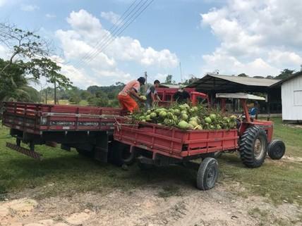 PBR0136_mvc-001f.jpg Brasilien 1136.66 Ha Farm Früchte - und Viehzucht - Farm