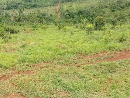 PBR0151_mvc-001f.jpg Brasilien 1000 Ha Tiefpreis - Grundstück mit Rohstoffen